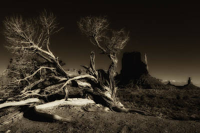 Photograph - Tree Monument Valley by Ron White