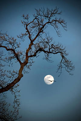 Photograph - Tree Moon Gull by Jerry Gammon