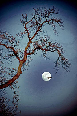 Photograph - Tree Moon Gull Two by Jerry Gammon