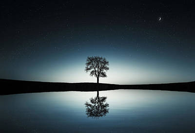 Tree Near Lake At Night Art Print