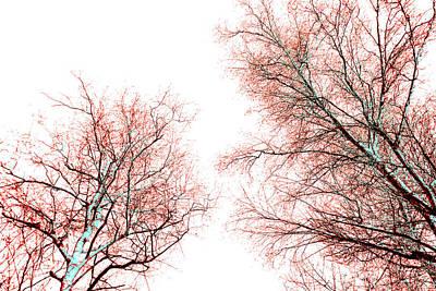Tree Print by Nina Peterka