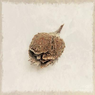 Tree Nut Art Print by Lucid Mood