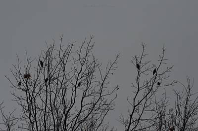 Have A Nice Day Photograph - Tree Of Birds by Sonali Gangane