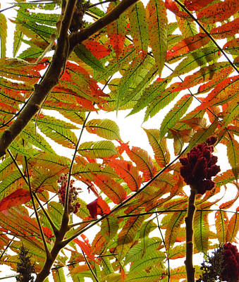 Photograph - Sumac In Transition by Shawna Rowe