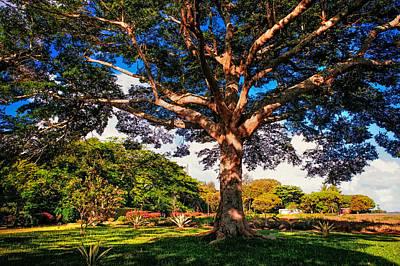 Photograph - Tree Of Joy. Mauritius by Jenny Rainbow