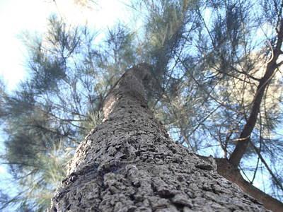 Tree Of Kambah Original