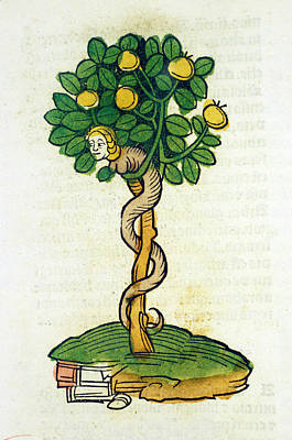 Tree Of Knowledge Art Print by National Library Of Medicine