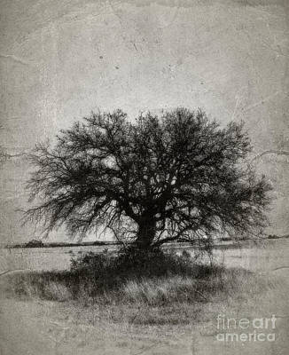 Tree Of Life - No.1958v Art Print by Joe Finney