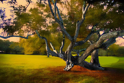 Photograph - Tree Of Life by Carlos Diaz