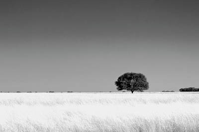 Photograph - Tree Of Life In Monochrome by Beyondmylens@harsh / Photography