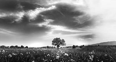 Field. Cloud Photograph - Tree Of Life by Ivan Vukelic