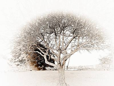 Photograph - Tree Of Life by Marcia Lee Jones