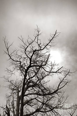 Photograph - Tree Of Life Past by Olivier Le Queinec