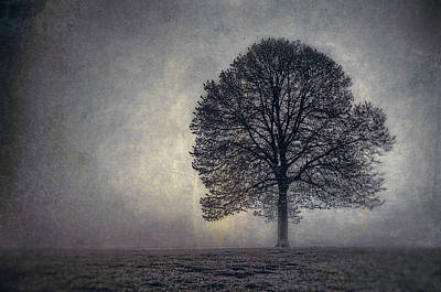 Minimal Photograph - Tree Of Life by Scott Norris