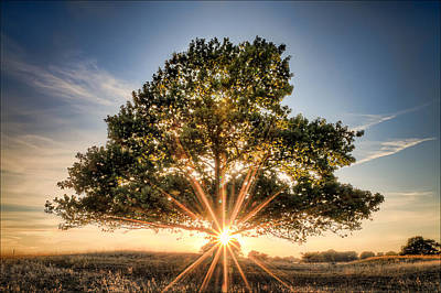 Rays Photograph - Tree Of Life by EXparte SE