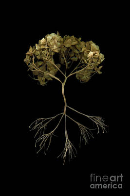 Scanography Mixed Media - Tree Of Life by Tim Kravel