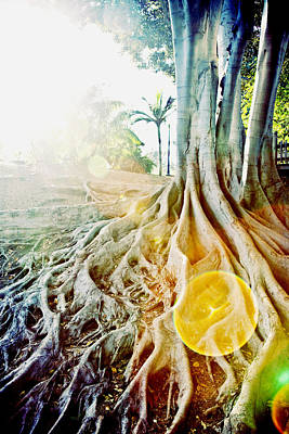 Photograph - Tree Of Light by Crystal Cox