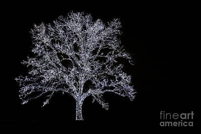 Photograph - Tree Of Light by David Lee