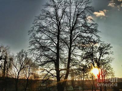 Photograph - Tree Of Light by Nina Ficur Feenan