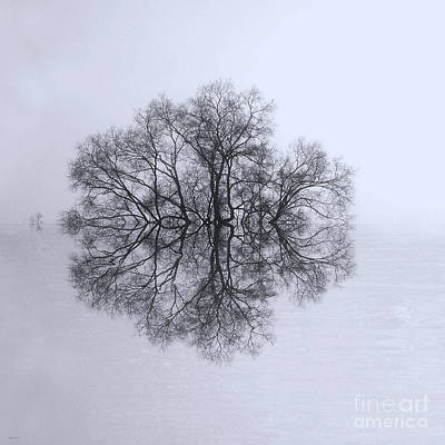 Photograph - Tree Of Reflection by Deborah Smith