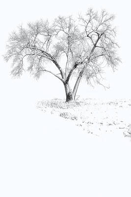Photograph - Tree Of Seasons by Ray Still