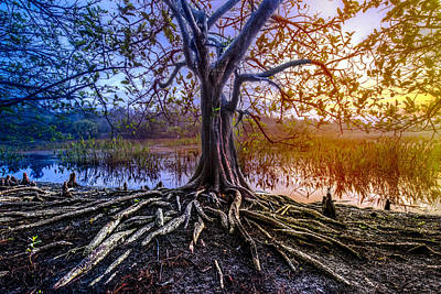 Photograph - Tree Of Souls by Debra and Dave Vanderlaan