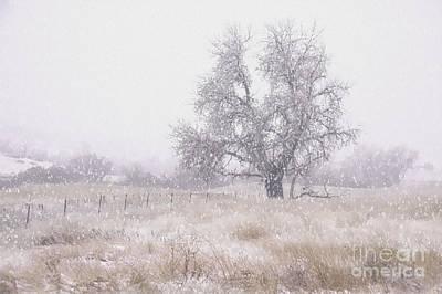 Tree Of Storm Art Print
