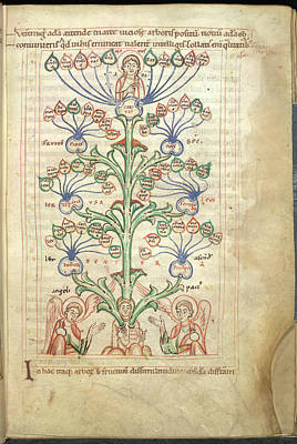 Genealogy Photograph - Tree Of Virtues by British Library