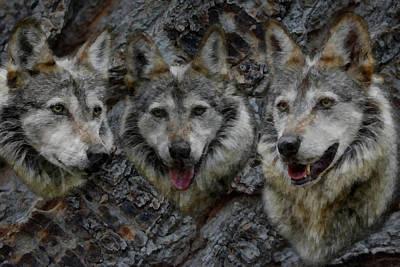 Canines Digital Art - Tree Of Wolves by Ernie Echols