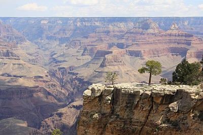 Tina Turner - Tree On a Cliff At the Grand Canyon by Masha Batkova