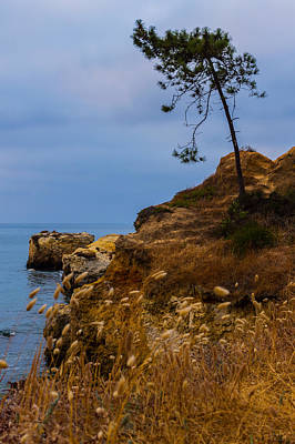Algarve Wall Art - Photograph - Tree On A Cliff II by Marco Oliveira