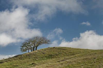 Photograph - Tree On A Hill by Greg Nyquist