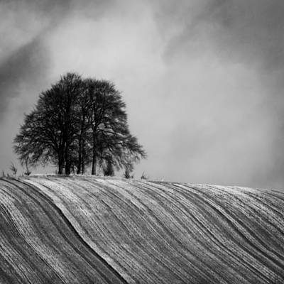 Photograph - Tree On A Hill by Ken Brannen