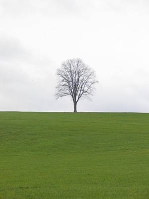 Photograph - Tree On A Hill by Mark C Ettinger