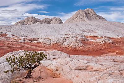 Photograph - Tree On Brain Rocks by Michael Blanchette