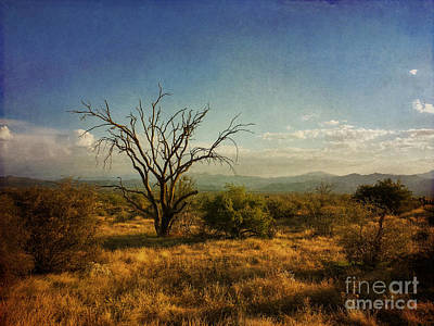 Tree On Caballo Trail Art Print