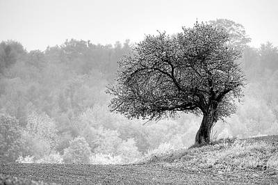 Photograph - Tree On Marilla Hill by Don Nieman
