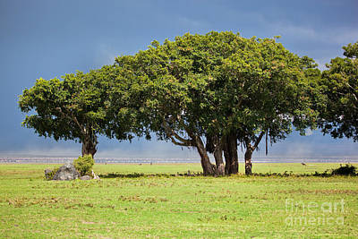 Tree On Savannah. Ngorongoro In Tanzania Art Print by Michal Bednarek