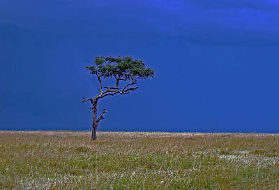 Photograph - Tree On Serengeti by Tony Murtagh
