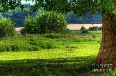 Tree On Summer Field Art Print by Michal Bednarek
