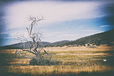 Blue And Brown Photograph - Tree On Sunrise Highway by Tanya Harrison