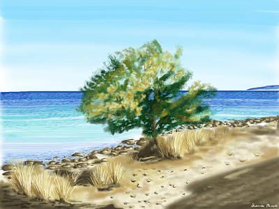Tree On The Beach Art Print