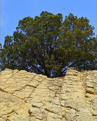 Eastern Red Cedar Wall Art - Photograph - Tree On The Edge by Meandering Photography