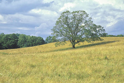 Photograph - Tree On The Hill by Jim Dollar