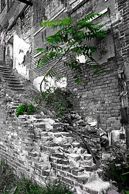 Photograph - Tree On The Stairs by Daniel Woodrum