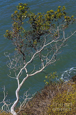 Photograph - Tree Over Water by Kate Brown