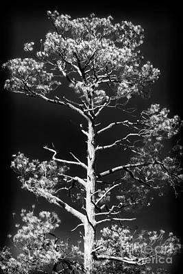 Photograph - Tree Pose by John Rizzuto