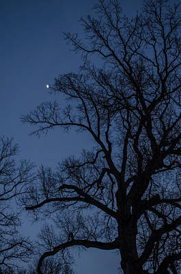 Photograph - Tree Reaching For The Moon by Jason Massey