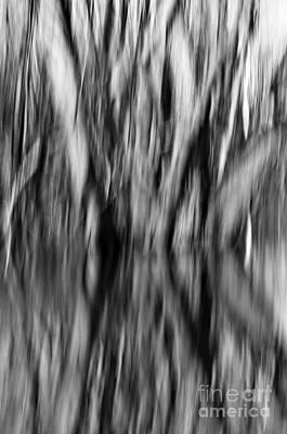 Photograph - Tree Reflection Black And White by Glenn Gordon