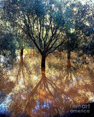 Most Sold Photograph - Tree Reflection by Noa Yerushalmi